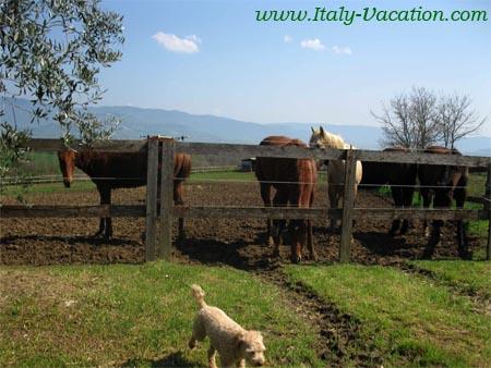 Agr. la Gabole  farmhouse, Agriturismo near cortona